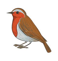 Drawing robin vector