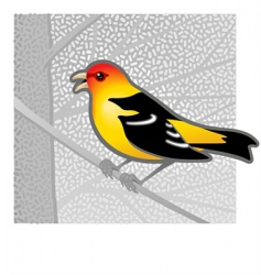 western tanager vector image