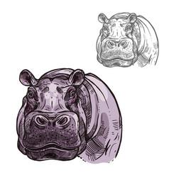 Hippopotamus hippo wild animal sketch icon vector