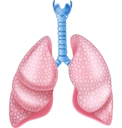 Cartoon of healthy lungs anatomy vector