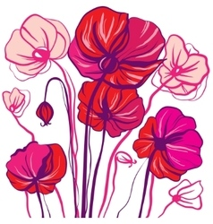 drawing bright red and pink poppy flowers vector image