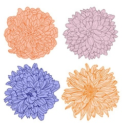 Hand drawn chrysanthemum flowers set vector