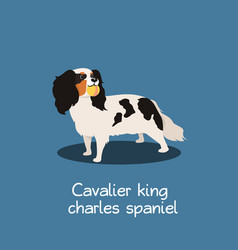 Cavalier king charles spaniel dog design vector