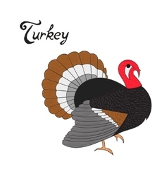 Bird turkey vector