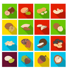 hazelnut pistachios peanuts and other types of vector image