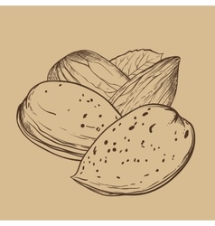 Almond isolated on brown background vector
