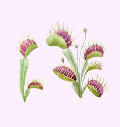 Watercolor flycatcher plant vector
