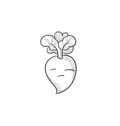 Beet sketch icon vector