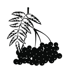 Branch of rowan icon vector