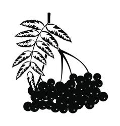 Branch of rowan icon vector