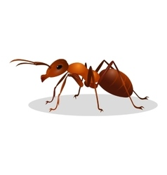Brown ant isolated on white Insect icon Termite vector image
