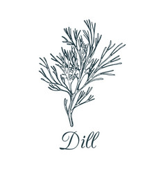 Dill isolated hand drawing vector