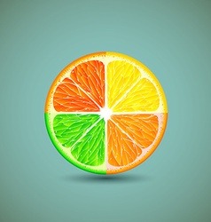 Icon citrus fruits vector