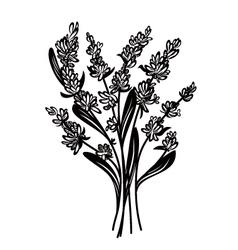Lavender vector