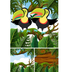 forest scenes with toucan birds vector image vector image