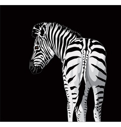 Body of a zebra with a tail on black background vector