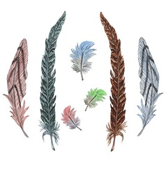 Feather2 vector image vector image