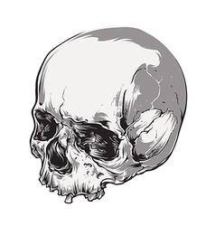 Skull Vecstor Art vector image