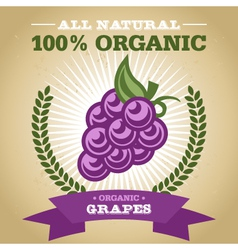 Organic grapes vector