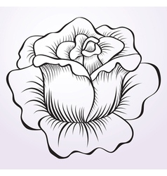 rose drawing vector image