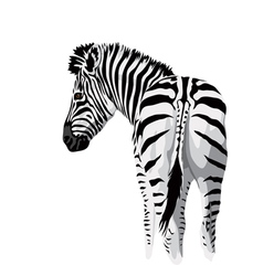 Body of a zebra with a tail vector