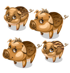 Set of cute pigs with brown eyes isolated vector