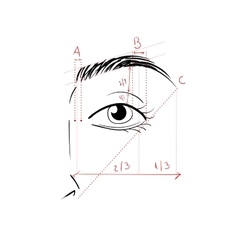 Shaping The Eyebrows vector image