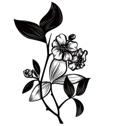 Tea plant vector