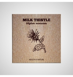 Herbs and spices collection - milk thistle vector