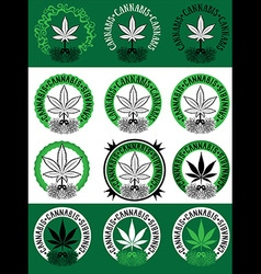 Marijuana cannabis leaf symbol design vector