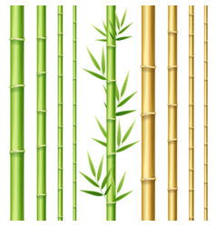 realistic 3d detailed bamboo shoots set vector image vector image