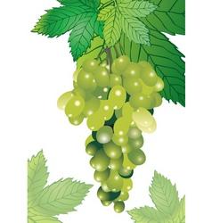Vineyard illustration vector