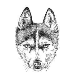 Sketch of husky vector