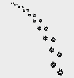 Dogs footprints 2 vector