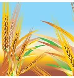 wheat illustration vector image
