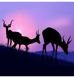 Grazing antelopes vector