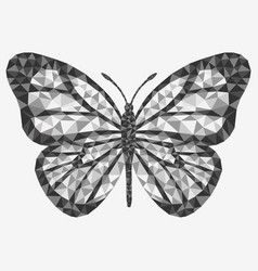 isolated butterfly vector image vector image