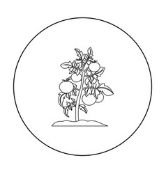 Tomato icon outline single plant icon from the vector