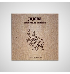 Herbs and spices collection - jojoba vector