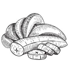 Bananas of sketchesdetailed citrus drawing vector
