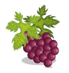 icon grape design vector image