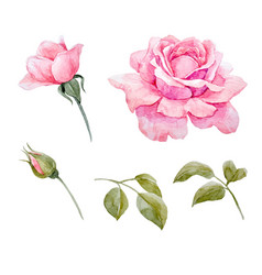 Watercolor roses set vector