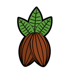 Cacao fruit chocolate icon image vector