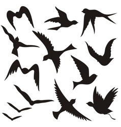 set of flying birds vector image vector image
