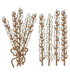 Set of willow branches vector