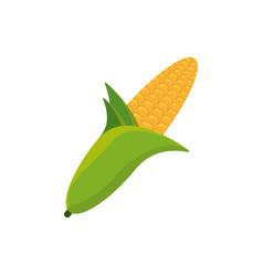 Corn grain food picnic vector