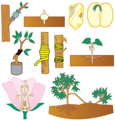 Plant Tree vector image