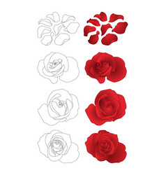 roses and petals set vector image vector image
