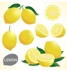 Set of lemon fruit in various styles format vector image