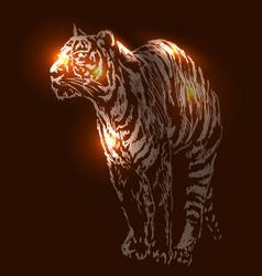 A tiger on a dark backgroun vector
